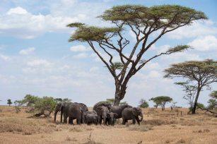 Elefanten_Serengeti_8