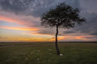 Baum und Wolkenstimmung Masai Mara 2018-1-2