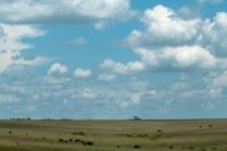 Elefanten Masai mara 2020_7-2